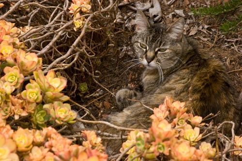 Emma resting in a spot worn bare by other cats over the years.  Photo by Anders Tomlinson.