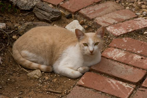 Snoopy the Cat is now the most regular visitor to the garden.  Photo by Anders Tomlinson.