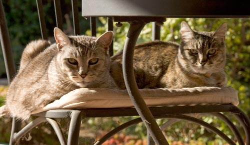 Mocha and Emma sit together in the garden's patio roof.  Photo by Anders Tomlinson.