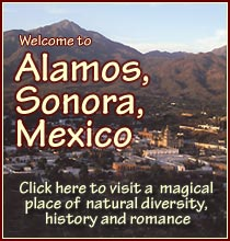 alamos-sonora-mexico.com, anders tomlinson, photos, videos, reports, history timelines, summer, spring, fall