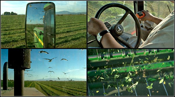 cutting alfalfa in the tule lake basin.  tulelake, ca.  photos by anders tomlinson