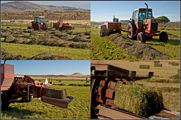 Baling tule lake basin alfalfa, tulelake, california.  photos by anders tomlinson