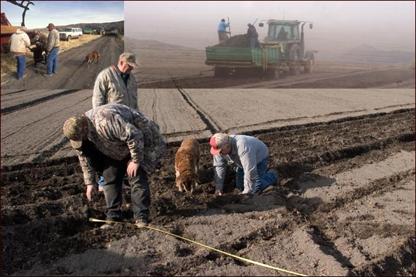 scenes of mint root plantings and checking seed depth, tulelake ca, photos by anders tomlinson