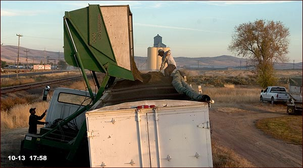 mint tea leaves being loaded onto a truck, tulelake ca, photo by anders tomlinson