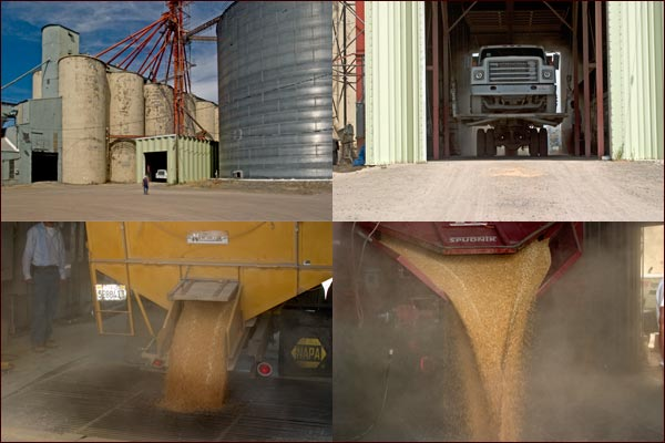 Grain is dropped from the grain trucks ad will be lifted to the grain elevators, tule lake basinm tulelake, ca,  photos by anders tomlinson