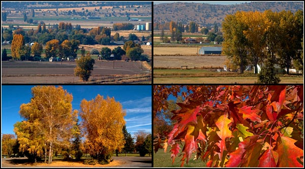 fall scenes in malin oregon.  photos by anders tomlinson.