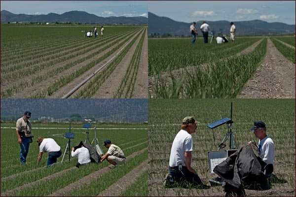 university of california intermointain research and extension in field measuring onion and soil data.  tule lake basin, tulelake ca.  photos by anders tomlinson