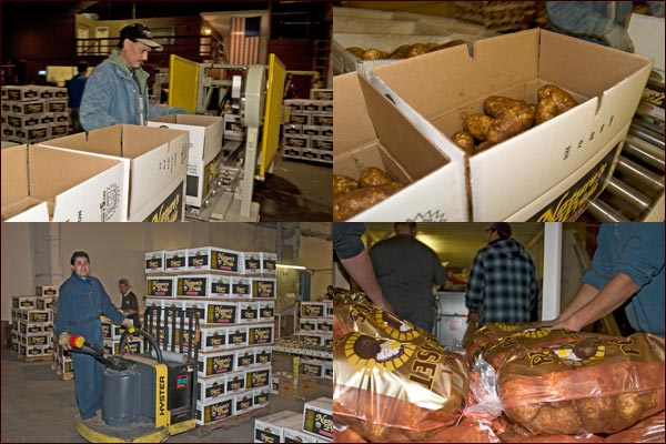 Potatoes are put in boxes and bags.  potato packing shed, tulelake, Ca.  photos by anders tomlinson.nd