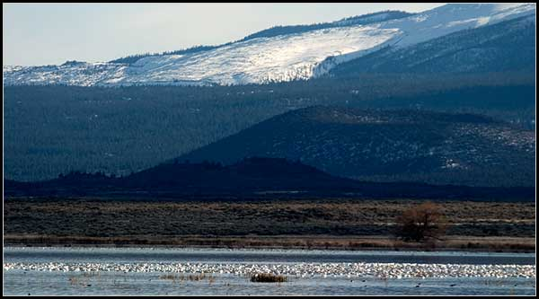 Tule Lake, Tule Lake National Wildlife Refuge, Medicine Lake, medicine lake highlands, modoc national forest, siskiyou county california, modoc county california, photo by anders tomlinson offers boating, swimming, waterskiing, fishing, hiking, camping, and picnicking. photo by anders tomlinson