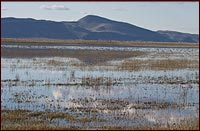 walking wetland being flooded in the spring on the tule lake national wildlife refuge. tulelake, ca. photo by anders tomlinson.