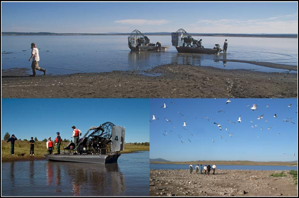 usfws arrive by airboats on an island in Clear lake National Wildlife Refuge.  modoc county california, tulelake california.  photos by anders tomlinson