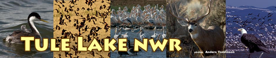 tule lake national wildlife refuge header photos by anders tomlinson