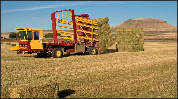 A bale wagon drops a unit next to another unit.  Later, a hay  squeeze will come and lift these units onto a truck and trailer. Alfalfa requires growers to be thinking two weeks ahead and to always be monitoring moistures levels in the soil and in the bales.  tule lake basin.  tulelake ca. photo by anders tomlinson