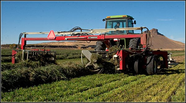 A hydraulic rake brings two windrows closer together as it turns the orchard grass over to dry evenly.   When the  grass has the proper moisture level it will be baled.  It will be sold to feed horse. tule lake basin.  tulelake, ca.  photo by anders tomlinson