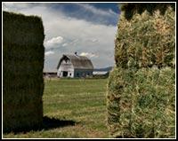 alfalfa icon, tulelake california.  photo by anders tomlinson