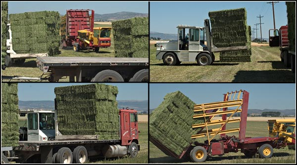 Later, a hay  squeeze will come and lift these units onto a truck and trailer. Alfalfa requires growers to be thinking two weeks ahead and to always be monitoring moistures levels in the soil and in the bales.  tule Lake Basin.  tulelake california.  photos by anders tomlinson