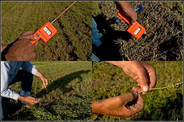 checking on alfalfa moisture and temperature before baling.  tule lake basin alfalfa.  tulelake, california.  photos by anders tomlinson