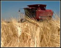 grain icon.  tulelake california.  photo anders tomlinson