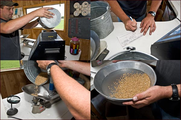 The grain is weighed and measured for moisture and protein, tule lake basin, tulelake ca. photos by anders tomlinson.