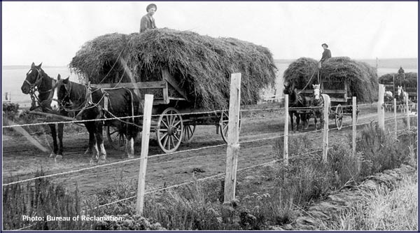 hay wagons 1905 klamath water users organized in 1905,  bureau of reclamation photo