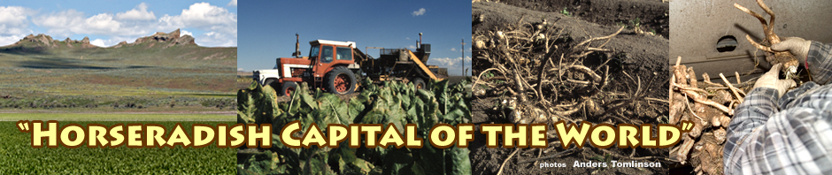 tulelake horseradish header. tulelake california. photos by anders tomlinson.