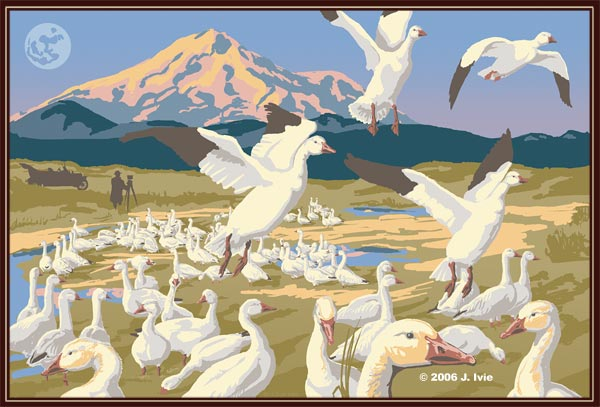 lower klamath national wildlife refuge illustration by © j. ivie 2006