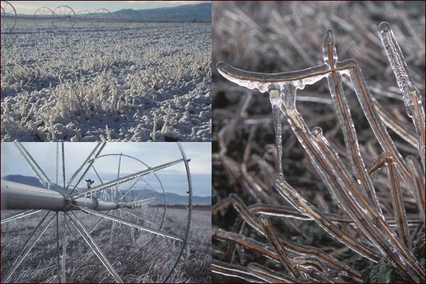 Snow and ice cover tulelake ca mint fields.  photos by anders tomlinson