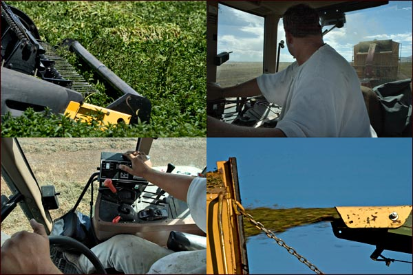 inside the tractor cab on a mint harvest, tulelake, ca.  photos by anders tomlinson