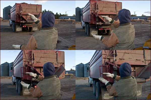 a farm worker uses hand signs to help a potato truck backing up to a tule lake basin potato shed. tulelake, ca. photos by anders tomlinson.