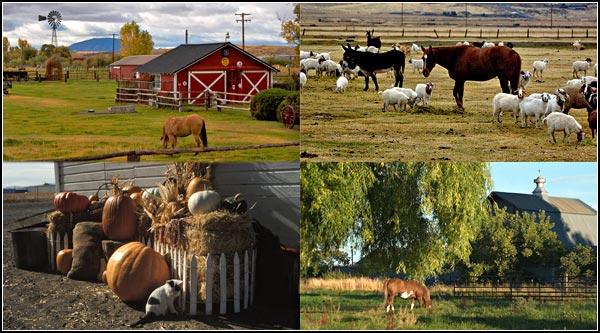 merrill oregon barn scenes.  photos by anders tomlinson.