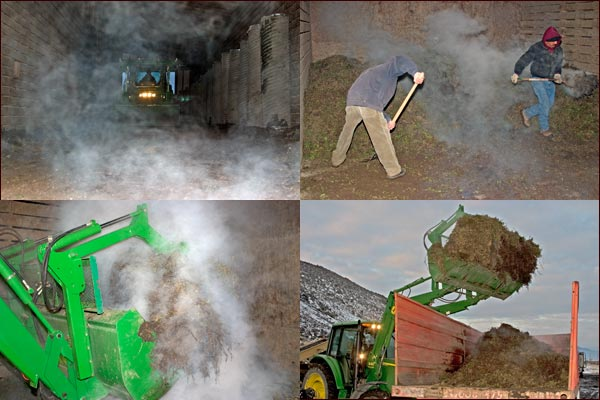 mint root stalk in cellar negins to combust, tulelake, ca.  photos by anders tomlinson