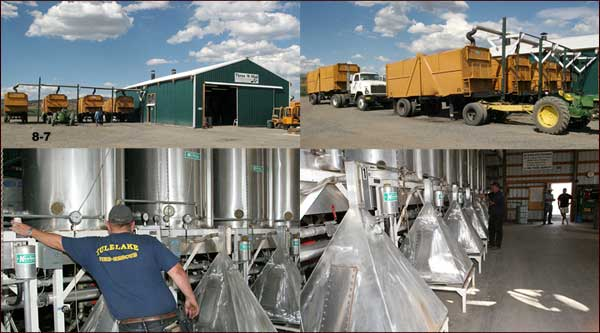 mint tubs arrive at Three M Mint's still.  tulelake, ca.  photos by anders tomlinson.
