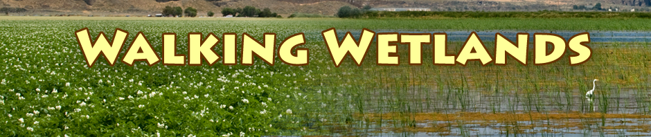 walking wetlands header. tule lake california. photos by anders tomlinso