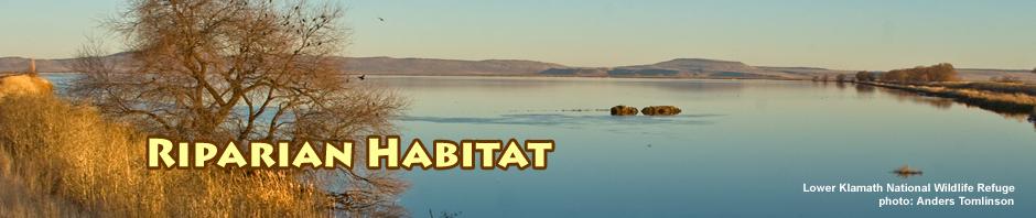 riparian habitat, lower klamath national wildlife refuge, photo by anders tomlinson