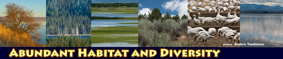 tulelake habitat header photos by anders tomlinson