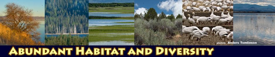 tulelake habitat header photos by anders tomlinson