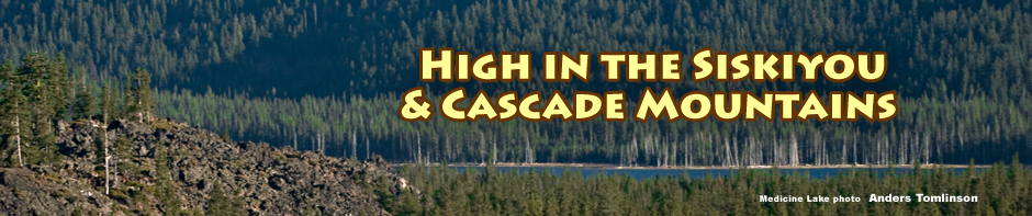 high elevation habitat. header. photo by anders tomlinson