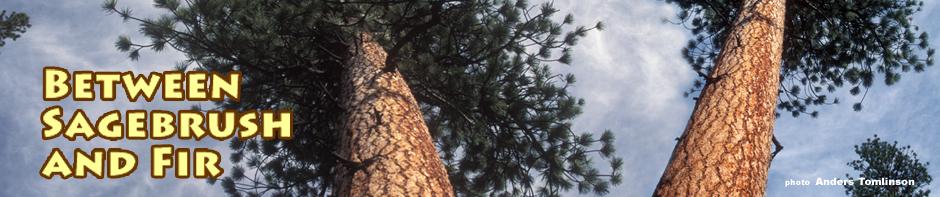 ponderosa - Lodgepole pine habitat. photo by anders tomlinson.