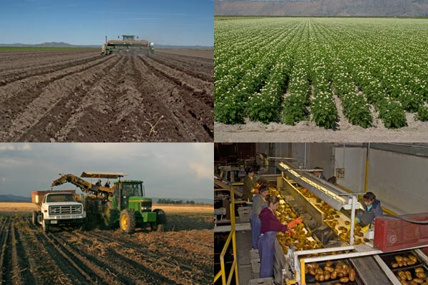 potato farming in the Tule Lake Basin, Tule Ca, Photos by Anders Tomlinson.