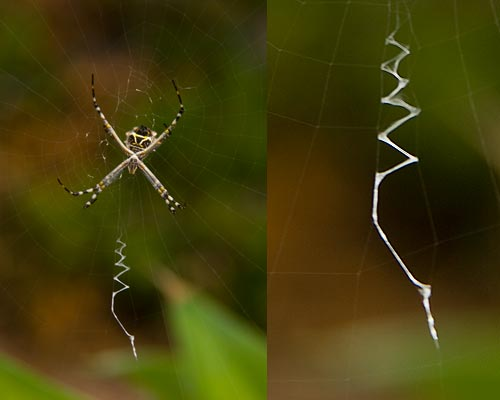 spider and lure, 9-02-12, san diego, ca.  photo by anders tomlinson.
