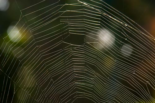 spider web after a couple of days, san diego, ca.  photo by anders tomlinson