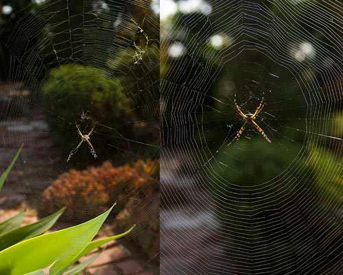 spider web, san diego, ca. 09-29-13. photo by anders tomlinson.