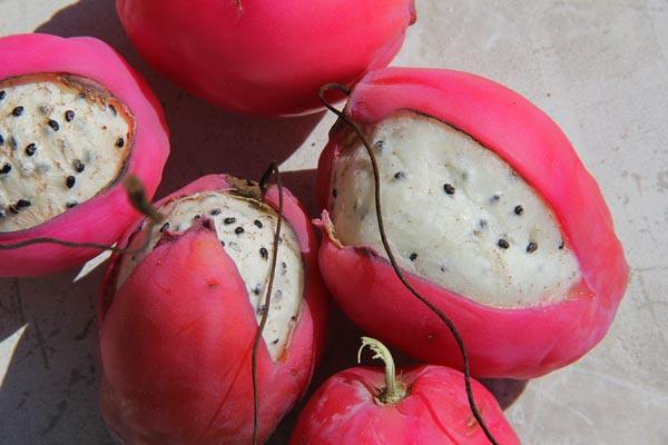 cactus fruit king fruit