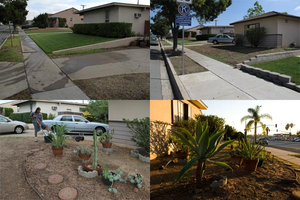 four view's of denver clay's low water usage garden in construction, san diego, ca.  photos by anders tomlinson