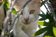 snoopy the cat in a garden terr, san diego, ca.  photo by anders tomlinson