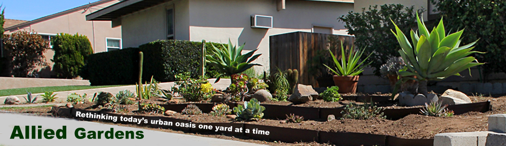 allied gardens, san diego, ca. front yard conversion from dead lawn to low water maintenance garden. film, audio , garden project by anders tomlinson denver clay and sonicatomics. photo by anders tomlinson . 2015. 2015 anders tomlinson, all rights reserved.