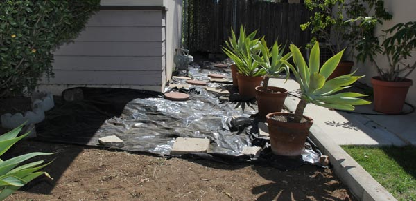 solar weeding using black plastic to cook weed seeds, allied gardens, san diego, ca. house. 05-13-14. photo by anders tomlinson. story of building a smart water yard. multi-media project: film by anders tomlinson. garden and music by SonicAtomics.