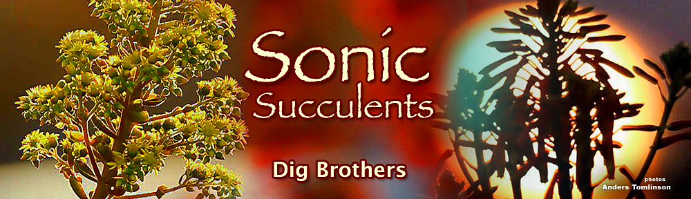 Sonic Succulents, Dig Brothers, Sonic Atomics, Anders Tomlinson, Denver Clay, Allied Gardens