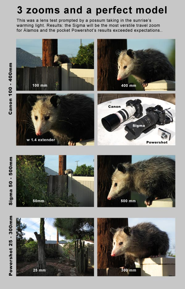 Canon 100-400mm L, Sigma 50 - 500mm and Canon Powershot 350 lenses used for test with Opossum in Serra Mesa, Ca.  Photo by Anders Tomlinson.