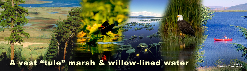 Upper klamath National Wildlife Refuge header. Photos by Anders Tomlinson.